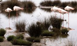 flamands-roses-lou-marques